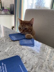 An orange cat playing What Do You Meme, Covid-19?, a card game by Payton Flood